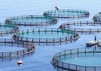 پرورش ماهیها و پیامدهای آن برای حیوانات و زمین