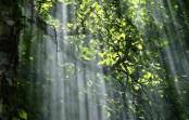 کوچهپسکوچههای ذهن من – هماغوشی درخت و آفتاب