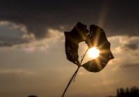 اگر ستاره بشوی… – شعری از فرزانه بابایی