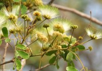 کوچهپسکوچههای ذهن من – درخت سخنگو