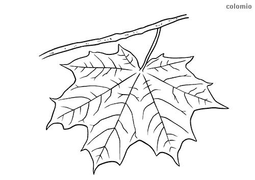 Baum Zum Ausmalen Ohne Blätter - Blume Malen