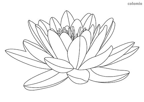 Malvorlagen Blumen Rosen