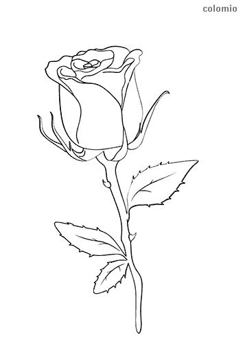 Rose Malvorlage kostenlos » Rosen Ausmalbilder