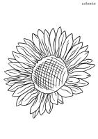 34 Sonnenblume Malvorlage Grundschule   Besten Bilder von ...