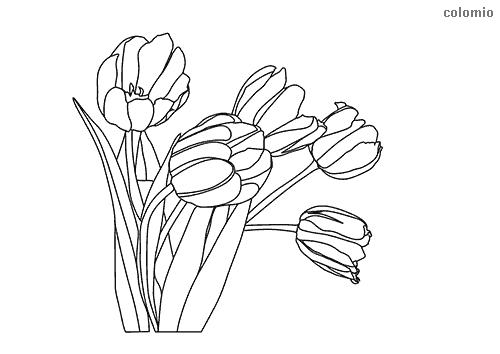 Tulpe Malvorlage kostenlos » Tulpen Ausmalbilder