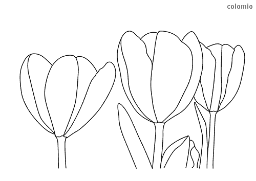 Tulpe Zum Ausmalen - Vorlagen zum Ausmalen gratis ausdrucken
