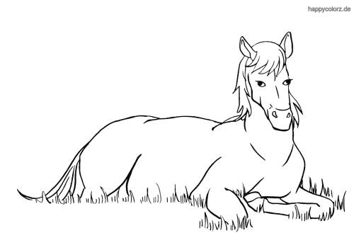Pferd malvorlage einfach - 28 images - malvorlage pferd
