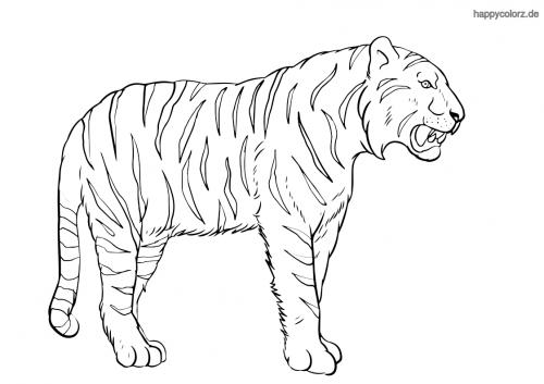 Tiger Malvorlage kostenlos » Tiger Ausmalbilder