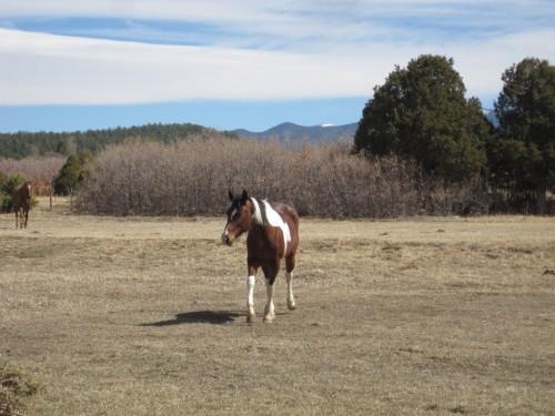 new mexico horse
