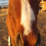 Horse Energy