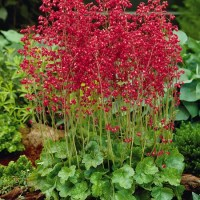 Perennial Plants | Sustainable Gardening | High Country ...