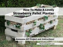 Make Lovely Strawberry Pallet Planter