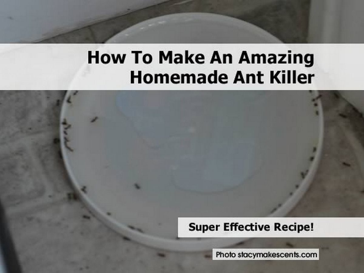 How To Make An Amazing Homemade Ant Killer