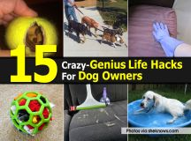 15 Crazy-Genius Life Hacks For Dog Owners