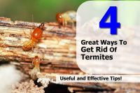 4 Great Ways To Get Rid Of Termites