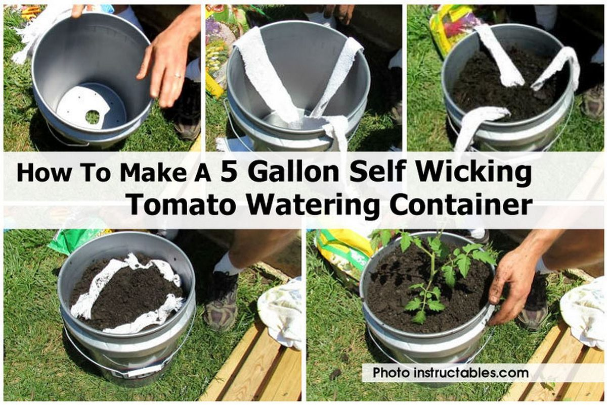 How To Make A 5 Gallon Self Wicking Tomato Watering Container