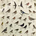 förskola skarpnäck fågel