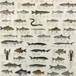 förskola skarpnäck fisk