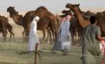 Camile blocate la granita Arabiei Saudite cu Qatarul