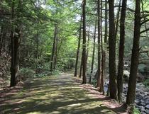 Pădure din Massachusetts