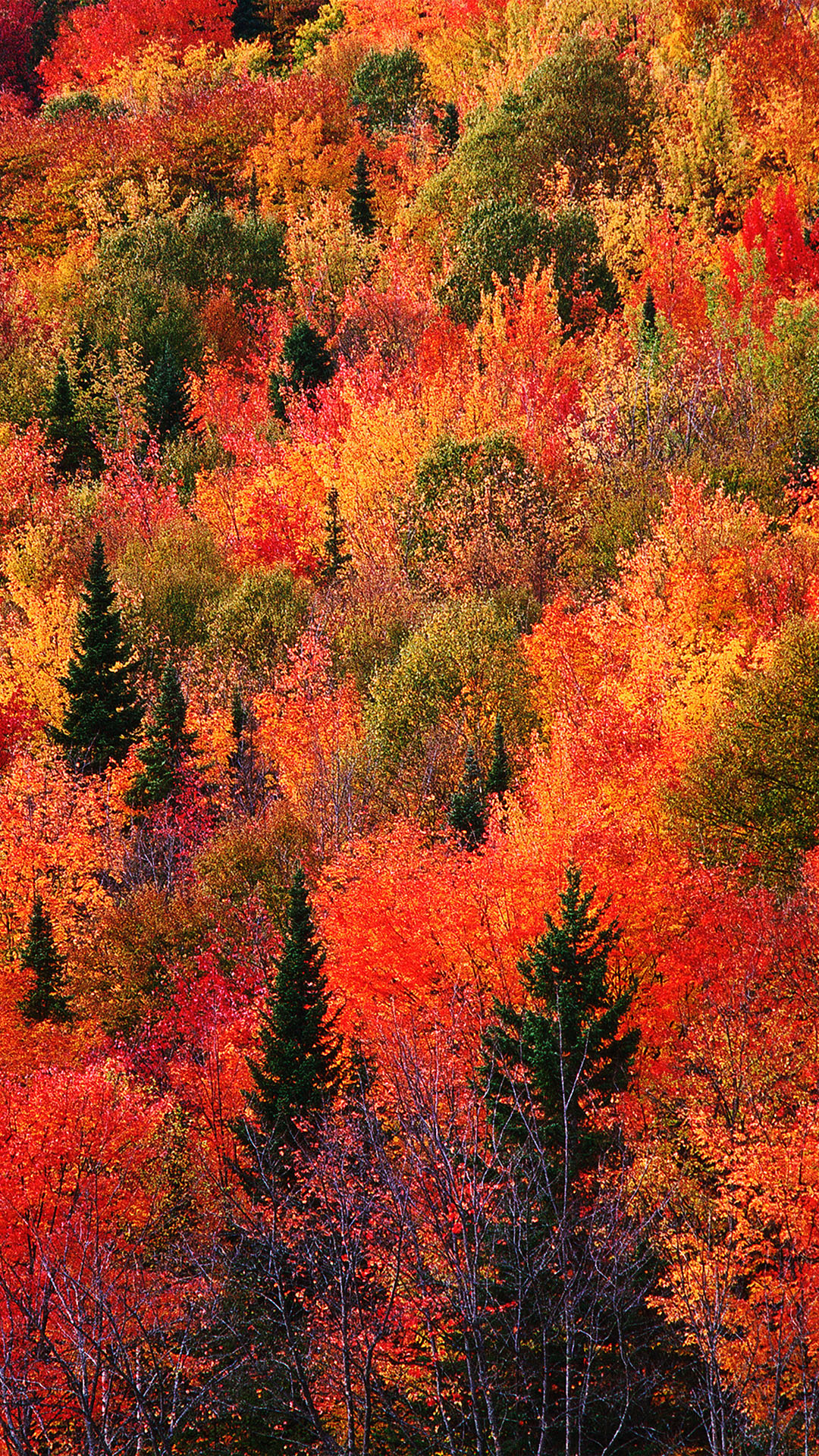 Autumn Falling Leaves Live Wallpaper Colorful Fall Wallpapers Of The Week