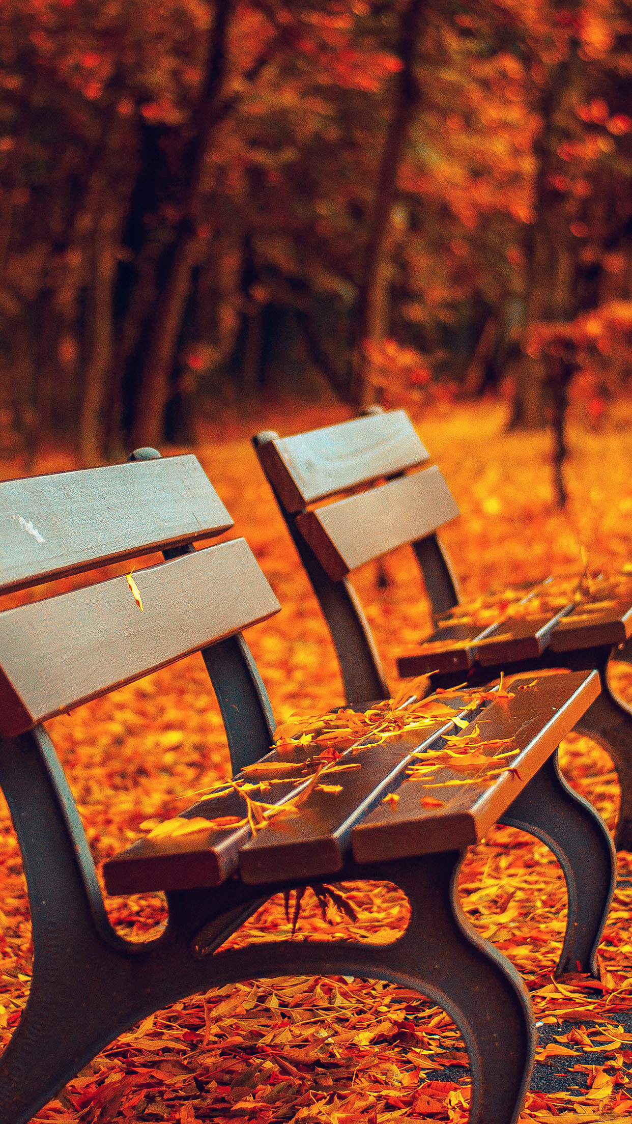 Falling Leaves Wallpaper Free Download Colorful Fall Wallpapers Of The Week