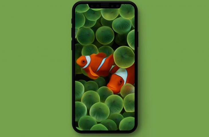 Apple Clownfish Wallpaper Iphone X Original Apple Wallpapers Optimized For Iphone X