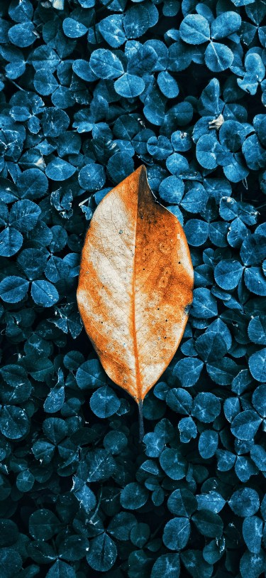 Fall leaves iPhone wallpaper wallsbyjfl 2