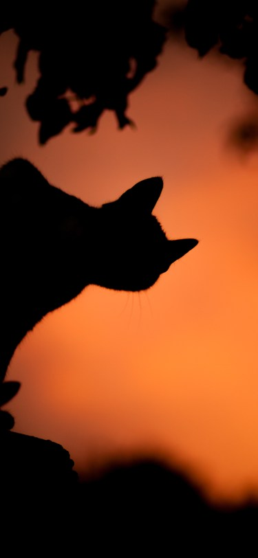 Halloween cat iphone wallpaper idownloadblog saso tusar