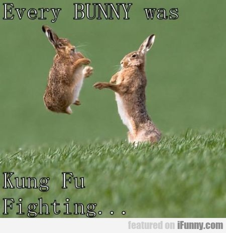 Every Bunny Was Kung Fu Fighter