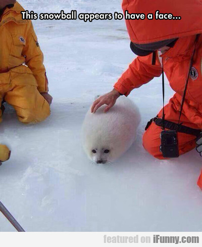 This Snowball Appears To Have A Face...
