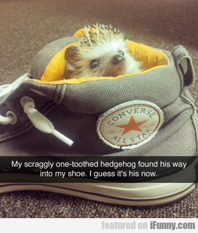 My Scraggly One-toothed Hedgehog Found His Way..