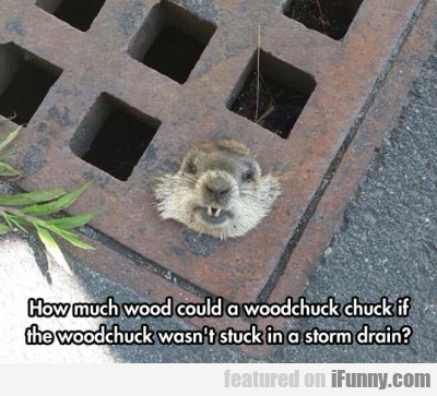 How Much Wood Could A Woodchuck Chuck If  Ifunnycom