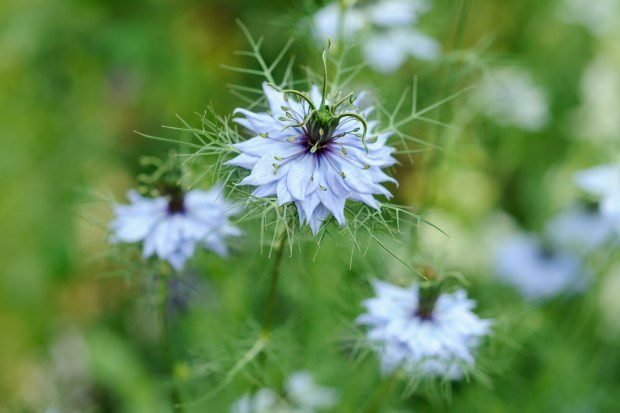 10 Flowers To Pick In August Gardenersworld