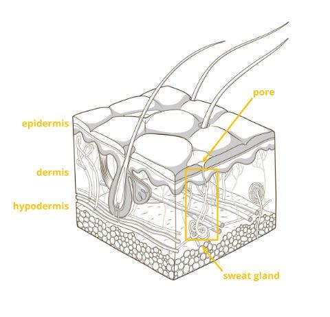 Galvanic Skin Response (GSR): The Complete Pocket Guide