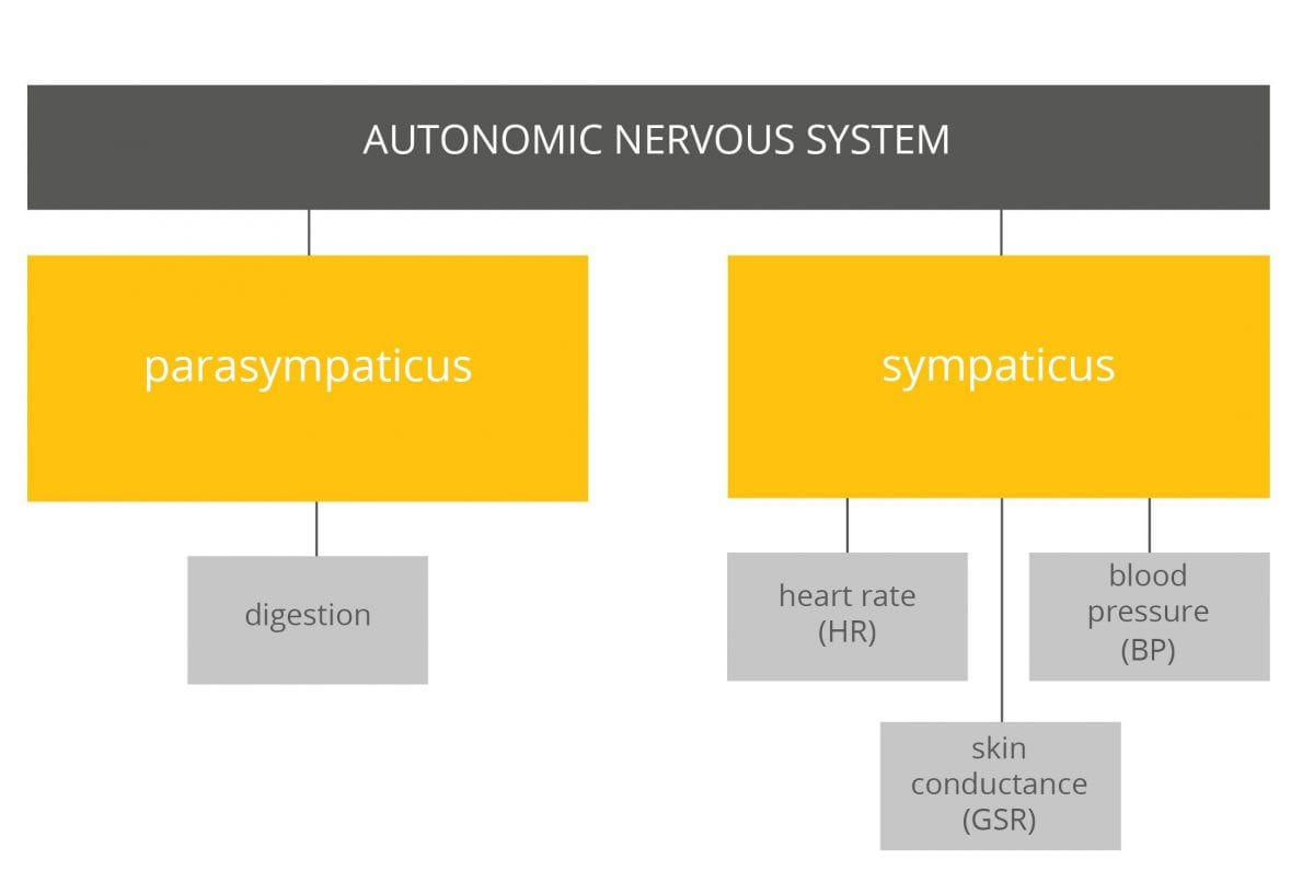 hight resolution of autonomic nervous system activities