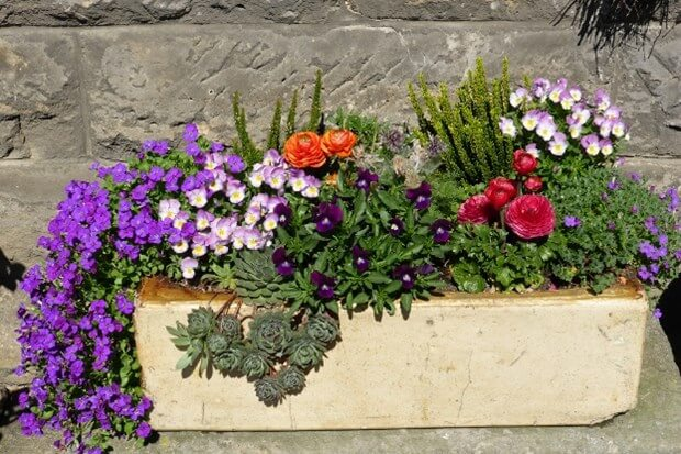 container gardening small patio ideas