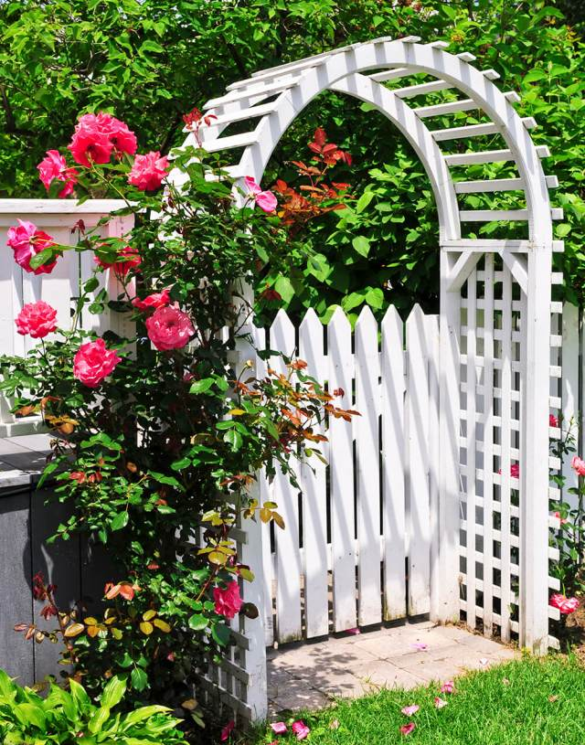 Backyard Arbor Ideas