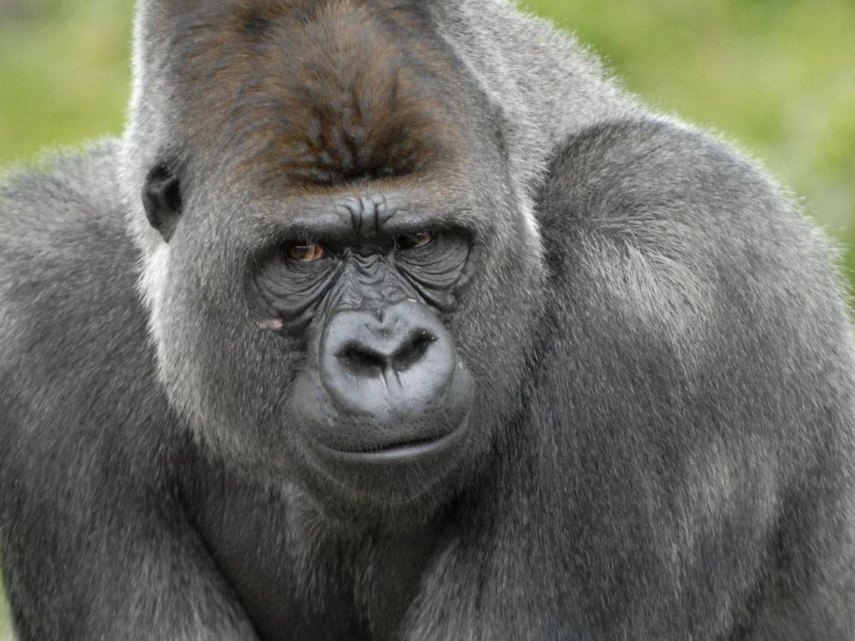 bekendste dier van rotterdam bokito