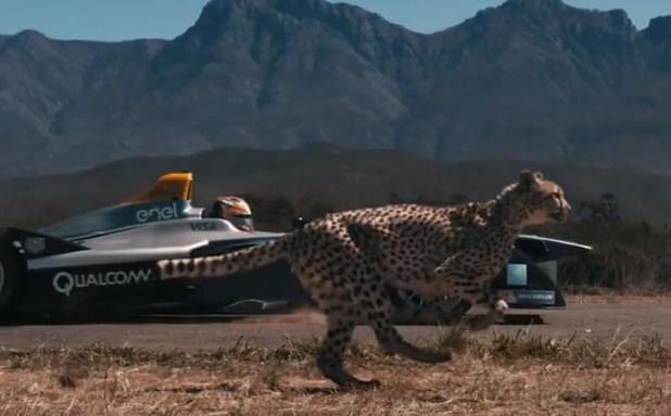 Cheetah racing with car