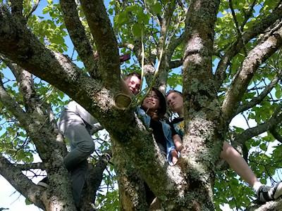 Photo d'adolescents grimpés grand un arbre