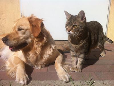 Règlementation chiens