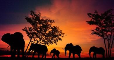 Les enfants en plein safari de printemps