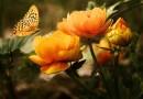 C'est le mois de la biodiversité !