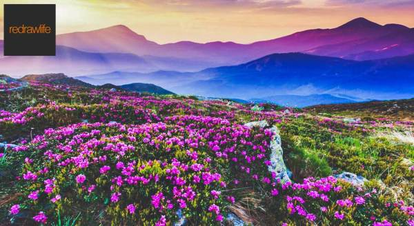 book tickets valley of flowers