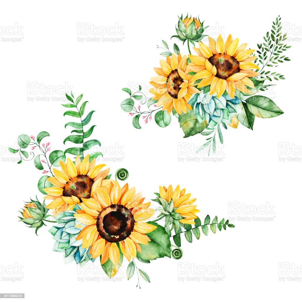 sunflower illustrations royalty-free