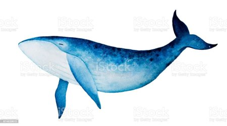 1 635 Humpback Whale Illustrations Royalty Free Vector Graphics & Clip Art iStock