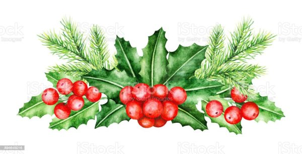 christmas wreath holly berry pine
