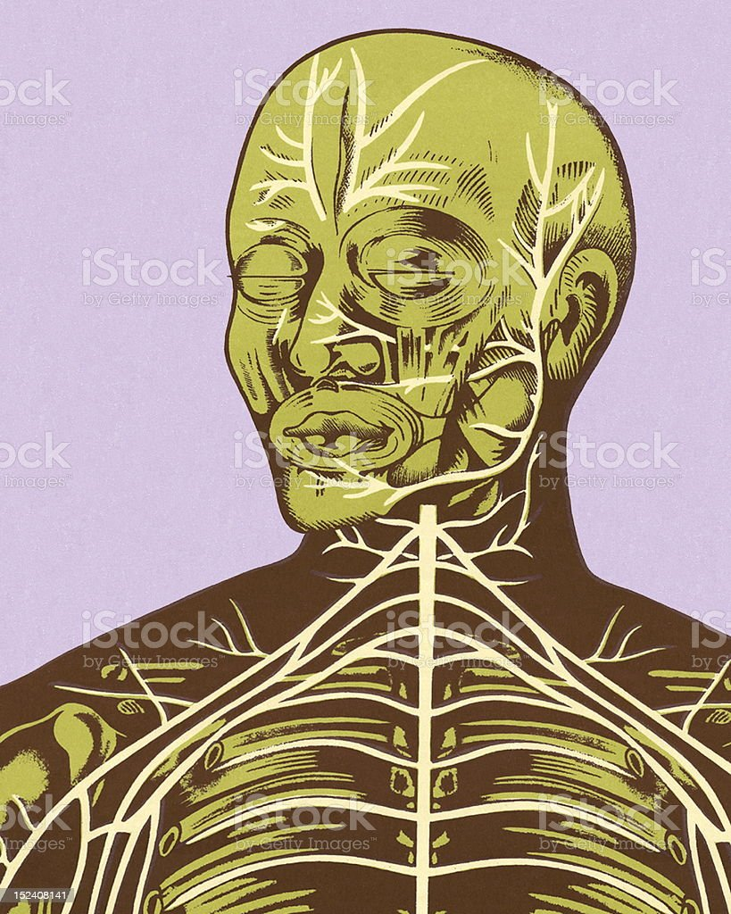 hight resolution of closeup of nerves of head and chest stock vector art more images diagram of head and chest
