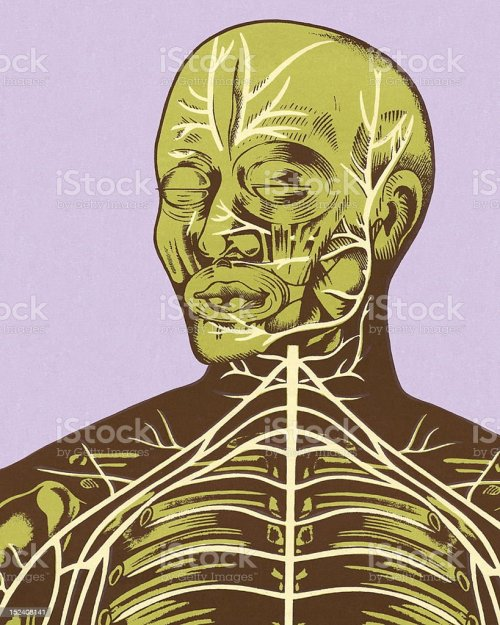 small resolution of closeup of nerves of head and chest stock vector art more images diagram of head and chest